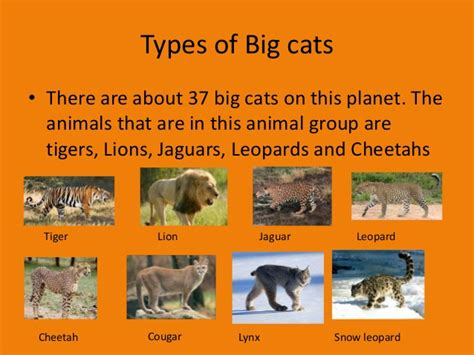 different types of jaguars big cat project 1