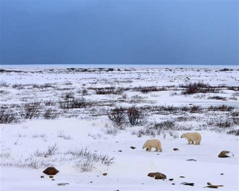 polar and polar owen slater photography