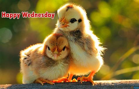 211 good morning wednesday images greetings picture for