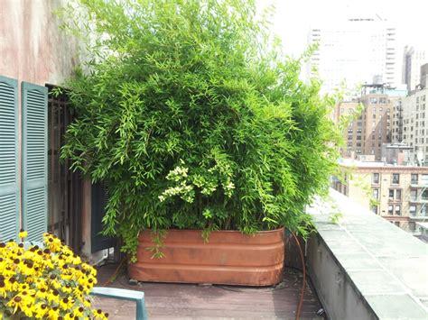 Fenster Sichtschutz Pflanzen by Bambus Im K 252 Bel Als Sichtschutz Und Deko Auf Der Terrasse