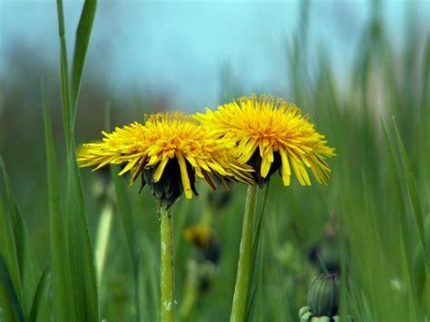 fiori per scusarsi ladradivento il cannocchiale