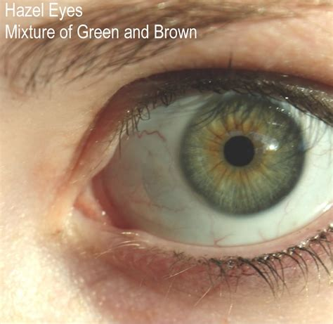 what part of the eye has color look at beautiful perceiving the eye color of