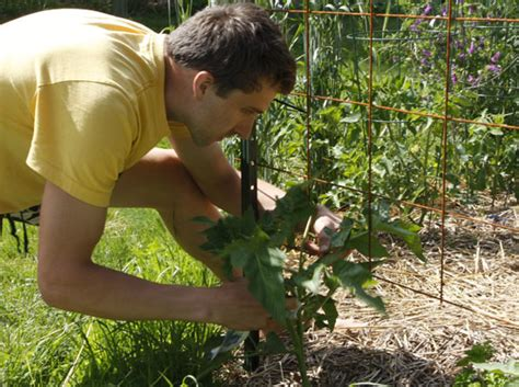 Dolomite Gardening by Dolomite Gardening Yates Hydrangea Pinking Liquid Lime