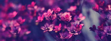 best purple cover purple flowers timeline cover 49283 covers for