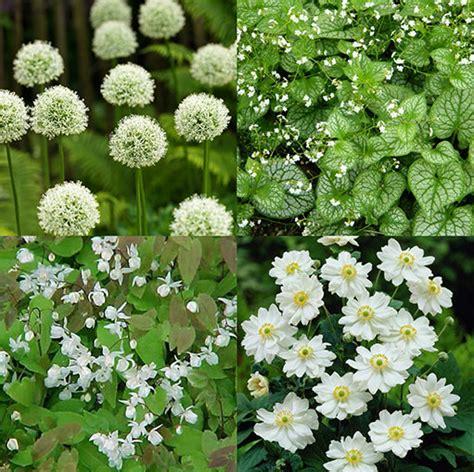 witte border bloemen de mooiste borderplanten mijntuin org