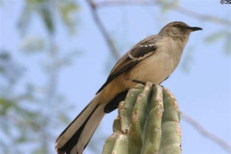 mockingbird phoenix az