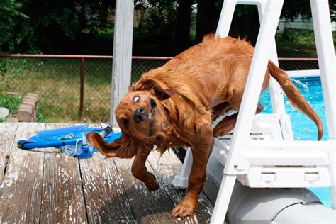 silly dogs 1funny