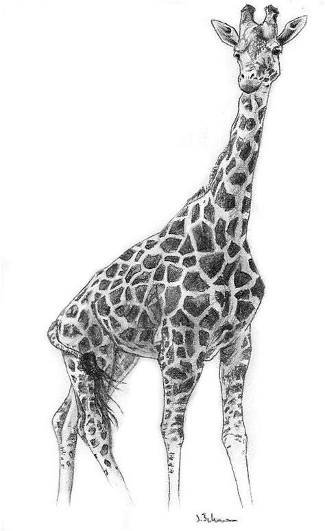 how to draw a giraffe doodle 1000 ideas about giraffe drawing on giraffe