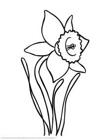 coloring pages daffodil flowers coloring pages daffodil flowers coloring page gallery