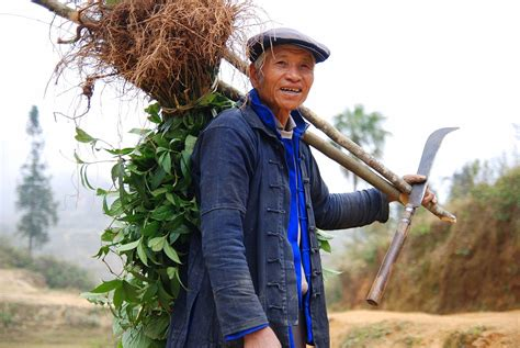 the farmer s file yuanyang hani farmer jpg