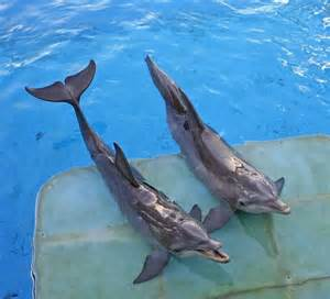 Watch dolphin tale 2 trailer debuts online in theaters things to