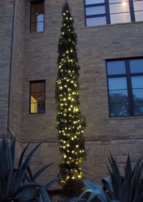 holiday tree wrapping lighting plantscape solutions  austin tx