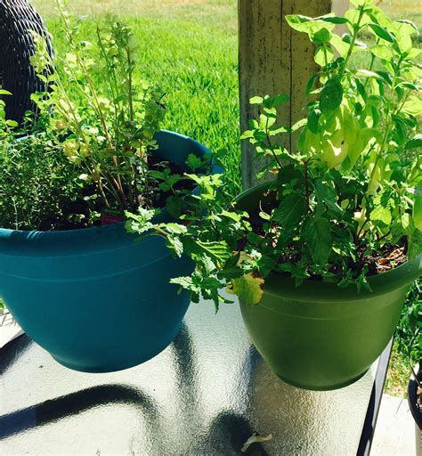 Vegetable Gardening In Central Florida How Does Your Garden Grow Tips For Vegetable Gardening In
