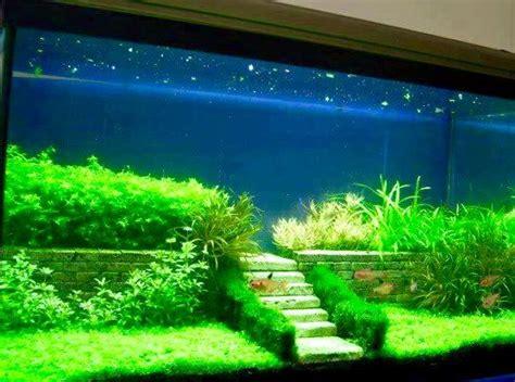 pin von jenessa fields auf shish aquarium aquascape