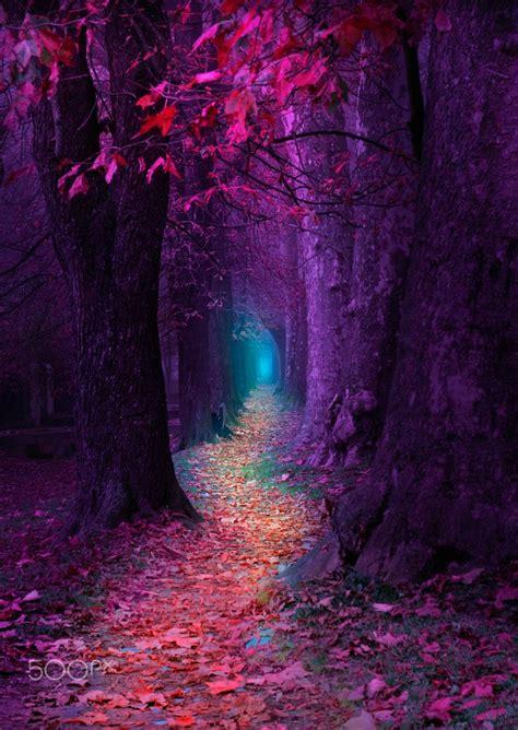 fairytale pathway purple red pathway ilidza
