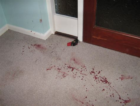 Blood In Carpet by The Blood On The Carpet It Has Not Washed Out