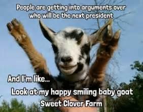 Happy Goat Meme - 183 best goats images on pinterest