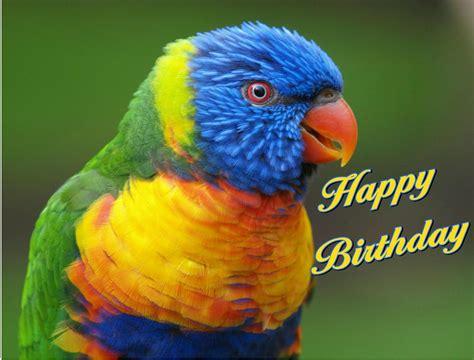 happy birthday bird images happy birthday bird barbacci flickr