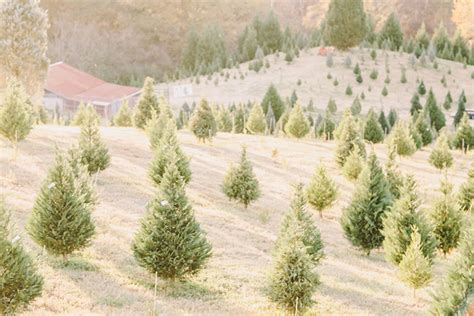 photo fridays a christmas tree farm engagement session