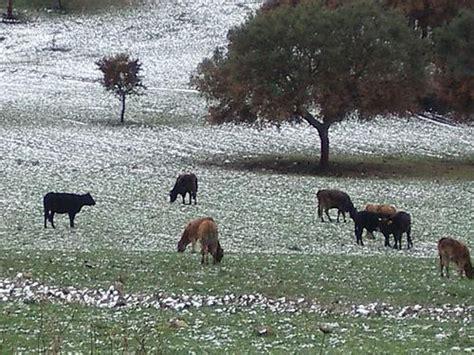 razione alimentare bovini da latte οίκος