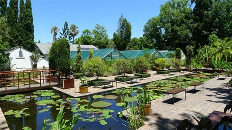 Stellenbosch University Botanical Garden All You Need To Stellenbosch Botanical Gardens
