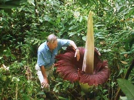 largest flower in the world which is the world s largest heaviest and foulest