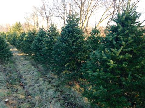 picking this year s christmas tree babytalk bungalow