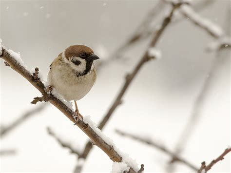 feeding birds in winter tips strategies saga
