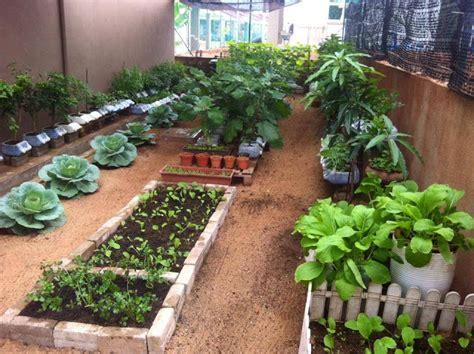 membuat kebun hidroponik di rumah tips cara membuat kebun sayuran di pekarangan rumah toko