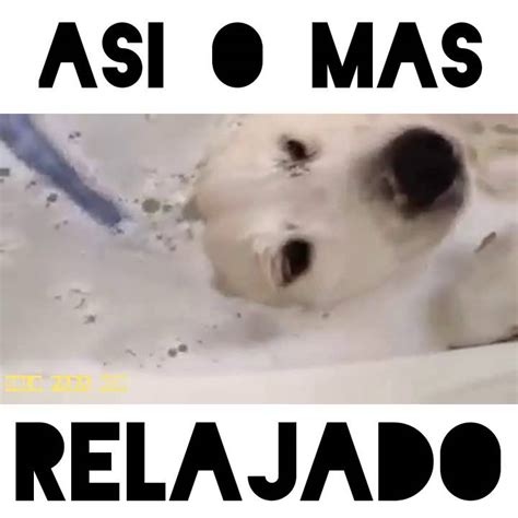 imagenes de viernes relajado perro ba 241 225 ndose relajado soloparareir oficial youtube