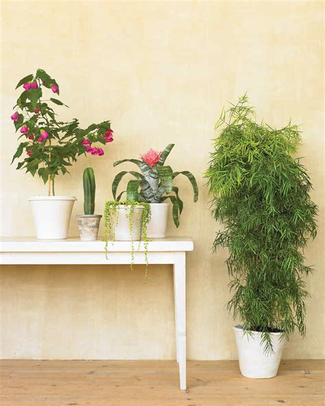 good houseplants for dark rooms 100 good houseplants for dark rooms low maintenance