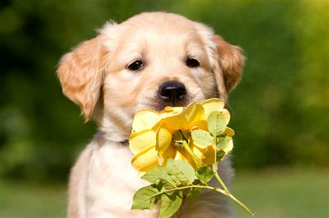 beautiful puppy dogs beautiful dogs puppies wallpapers hd wallpapers images pictures desktop backgrounds