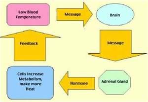 biology9g the endocrine system