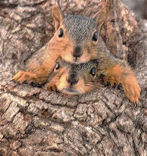 let me see you do the squirrel 174 best images about squirrels on pinterest baby