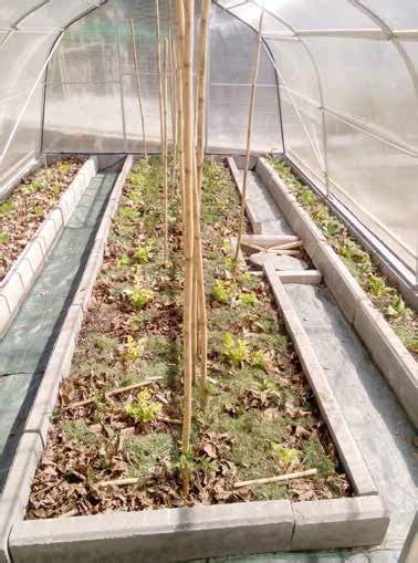 Cura Delle Piante by Cura Delle Piante Con Il Biogiardiniere Casa Naturale