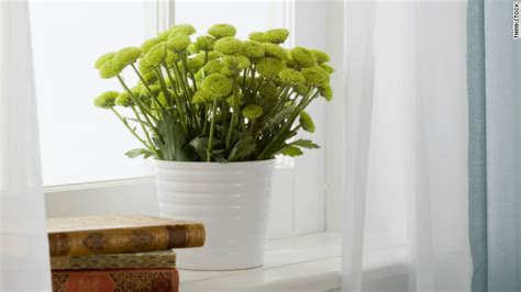 plants that don t need natural light a guide to indoor gardening cnn com