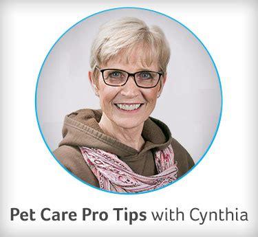 prenatal vitamins for dogs multivitamins or prenatals for dogs