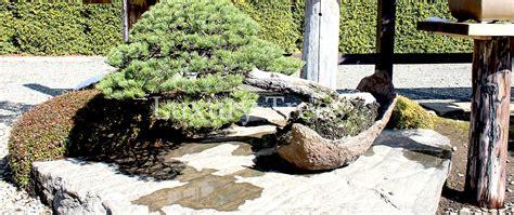 bonsai garten bonsai garten 187 luxurytrees 174 schweiz