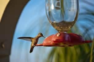 how to make homemade hummingbird nectar recipe going