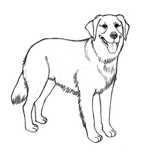 Golden Retriever Sitting Outline by Pencil Sketches And Drawings How To Draw A Golden Retriever Puppy Color Drawing Litle Pups