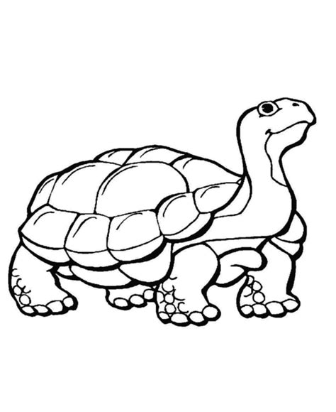 coloring pages animals hibernating hibernating animals coloring pages coloring home