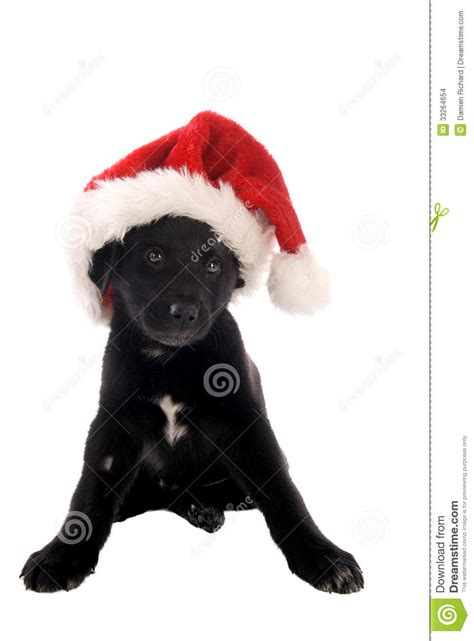 black puppy with christmas hat stock images image 33264654