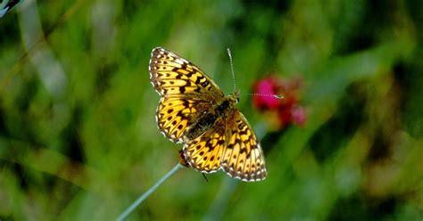 wallpaper bunga dan kupu kupu wallpaper kupu kupu dan bunga gambar kartun lucu dan