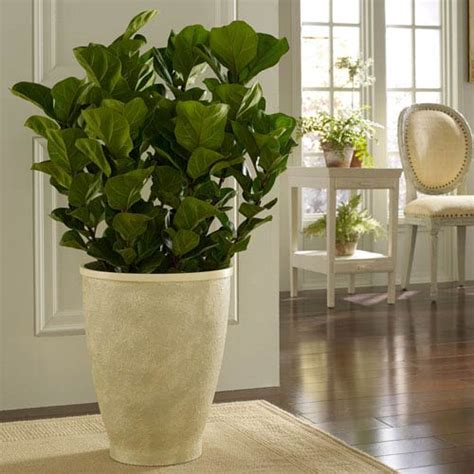 Planters For Indoor Plants by Painted Indoor Planter Bellacor