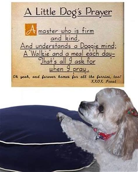 dogs prayer a s prayer puppy