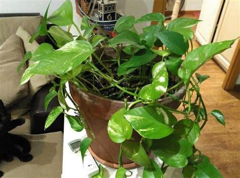 plantas en agua interior 7 consejos b 225 sicos para cuidar tus plantas de interior
