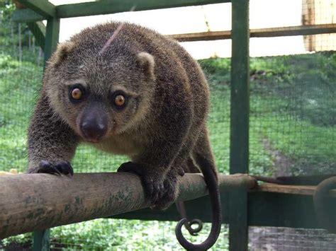alam negeri pembagian jenis fauna  indonesia
