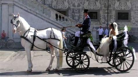 cavalli carrozze carrozze a bergamo il comune rispettiamo la vita dei