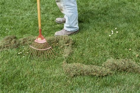 how to get rid of moss in lawns
