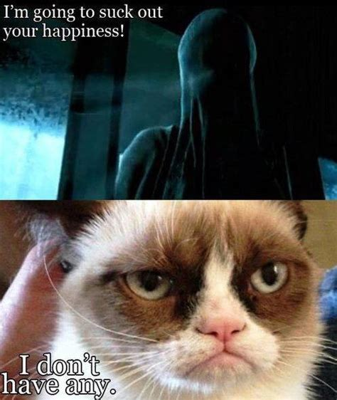 Grumpy Cat Yes Meme - harry potter and grumpy cat funny pinterest